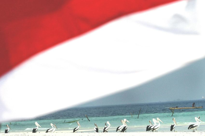 Beach Sand Water Sea Large Group Of People People Only Men Adults Only Large Group Of Animals Day Outdoors Bird Nature Adult Beauty In Nature Flamingo Animal Themes Sky Pelicans Pelican Birds AmbonIsland INDONESIA