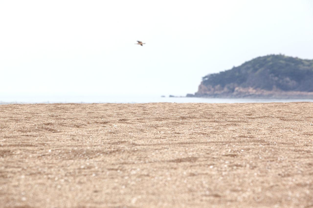 Beautiful stock photos of south korea, Beach, Bird, Clear Sky, Coastline