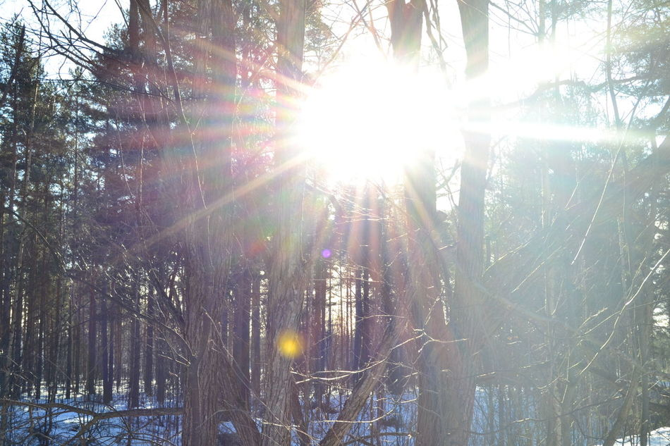 Beauty In Nature Branch Day Forest Growth Lens Flare Low Angle View Nature No People Outdoors Scenics Shining Sky Snow Streaming Sun Sunbeam Sunlight Tranquil Scene Tranquility Tree Winter