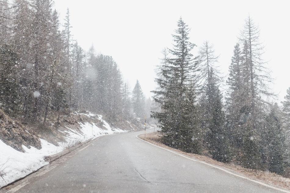 Snow Snow Covered Snow Day Snow ❄ Snowcapped Mountain Snowing Snowing Day Snowing ❄ Snowy Tree Trees