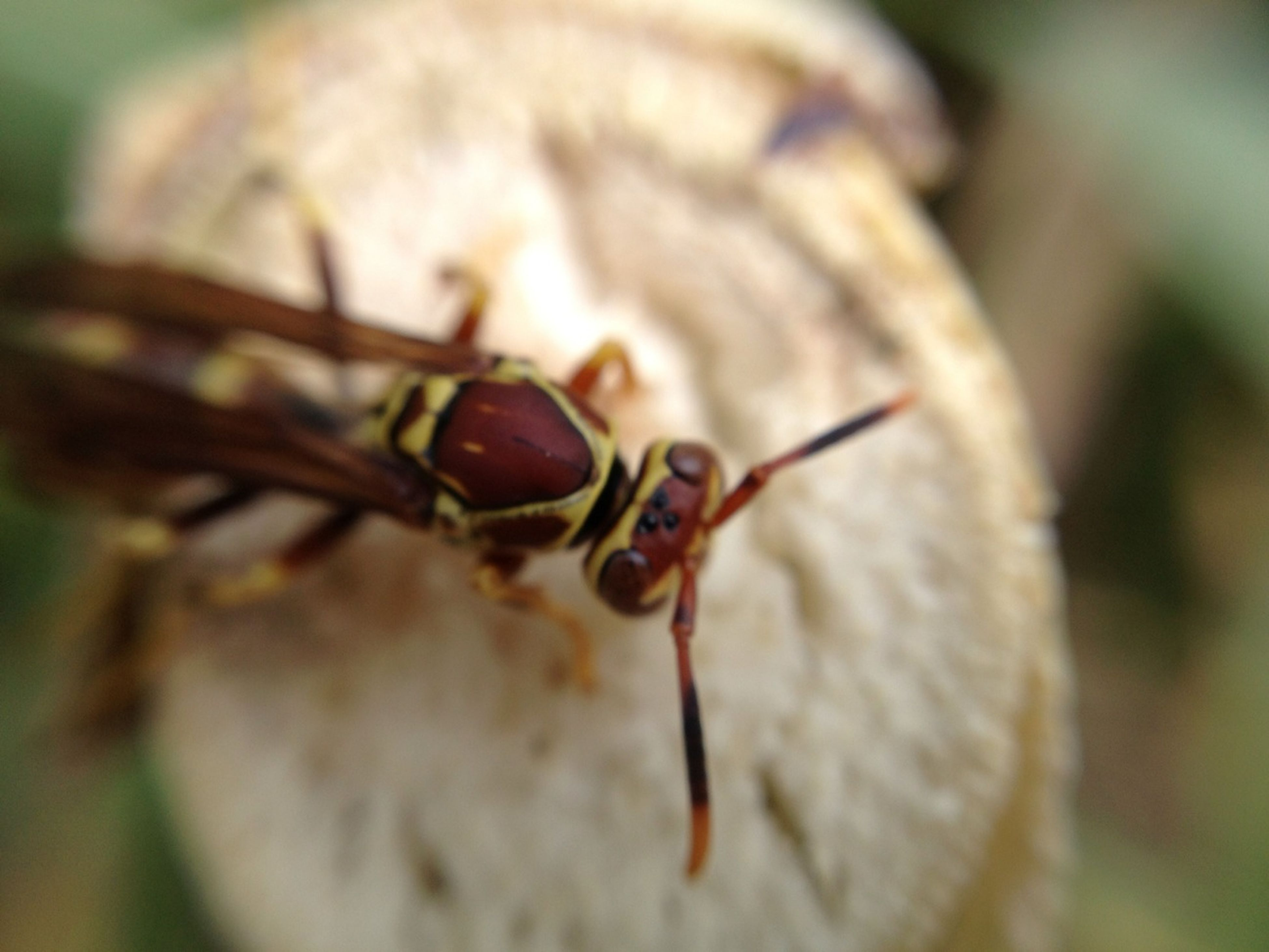 animal themes, one animal, insect, animals in the wild, wildlife, close-up, focus on foreground, selective focus, animal antenna, dragonfly, nature, day, no people, outdoors, grasshopper, plant, zoology, twig, leaf, snail