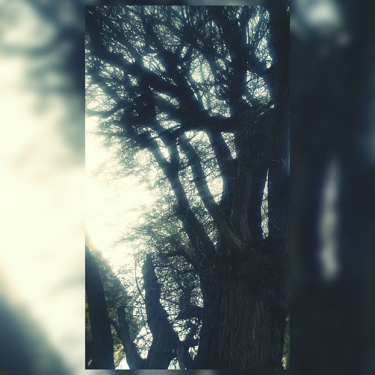 For The Love Of Trees ~ Timepass Clicks Calmintrees Killingtime