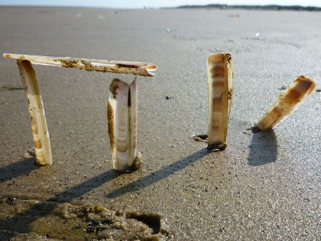 Beach Beach Photography Coastline Light And Shadow Razor Clams Seaside Shell Shells Our Best Pics