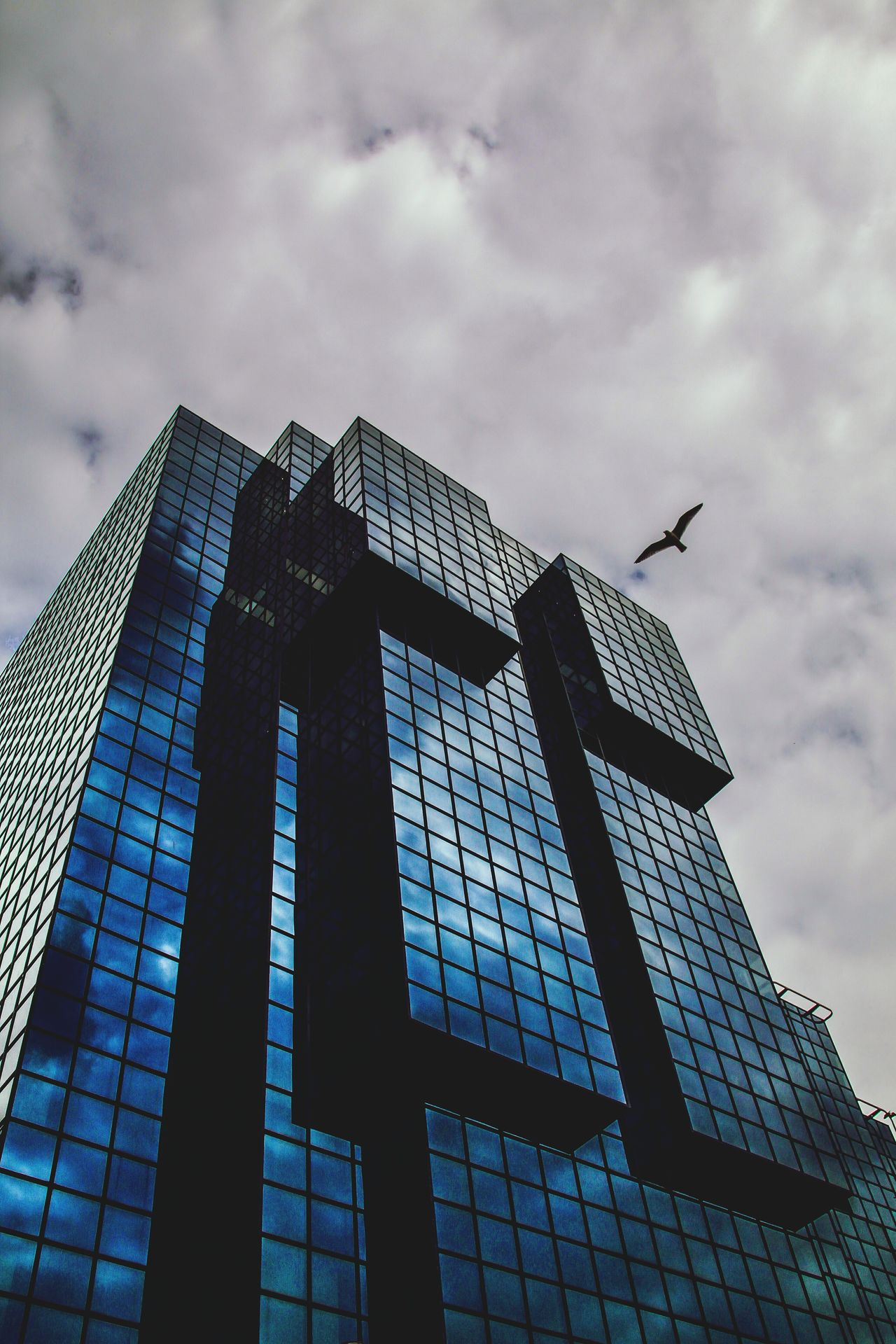 Architecture London Low Angle View Sky Building Exterior Cloud - Sky Business Finance And Industry No People Outdoors Day Skyscraper Modern The Street Photographer - 2017 EyeEm Awards Neighborhood Map Travel Destinations Travel The Architect - 2017 EyeEm Awards Mirror Reflection EyeEm Gallery Cloudy Sky Check This Out Building Reflections Architecture Seagull Seagulls In Flight BYOPaper!