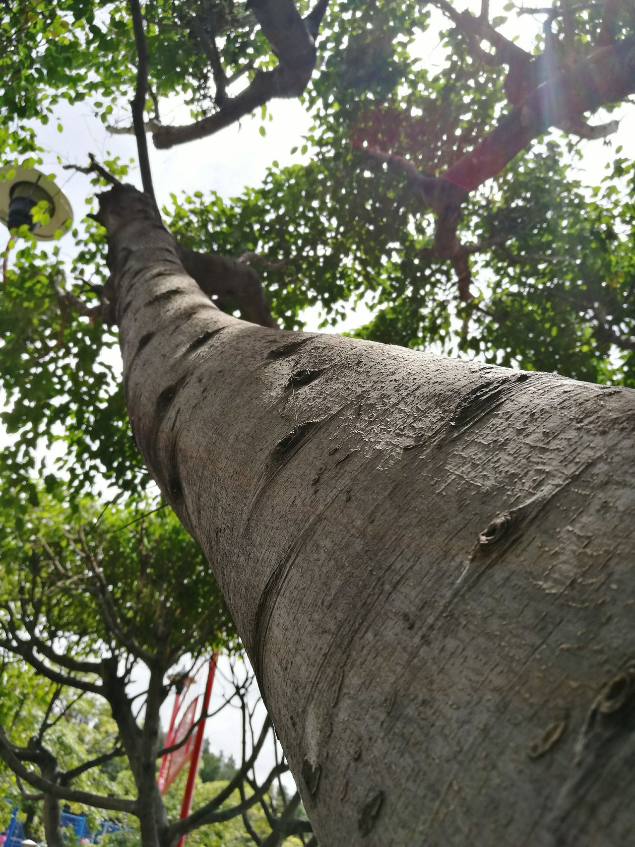 Tree Tree Trunk Low Angle View Growth Branch Day Nature Outdoors Green Color Diffusion Diffuser Tree Branches Trees And Nature Diffused Treetastic Tree_collection  Treecollection Tree Tree Trunk Trees
