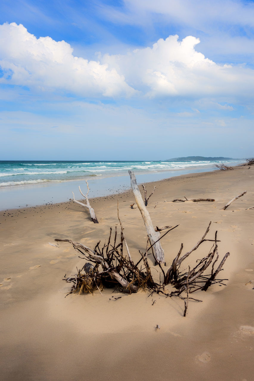 sea, sky, nature, water, beauty in nature, scenics, beach, sand, tranquility, horizon over water, cloud - sky, tranquil scene, day, outdoors, no people, dead tree