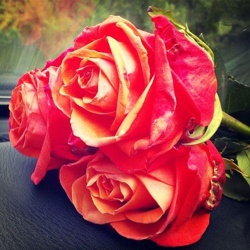 Немного цветов зимний заснеженный октябрьский день! First Eyeem Photo
