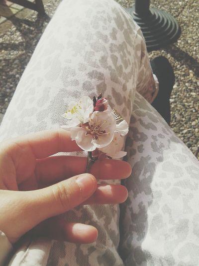 Schooltime Spring