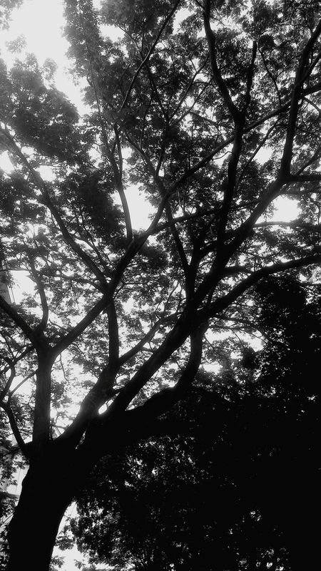 Tree Nature Low Angle View Growth Beauty In Nature No People Sky Outdoors Tranquility Backgrounds Day Branch Blackandwhite Photography Black And White