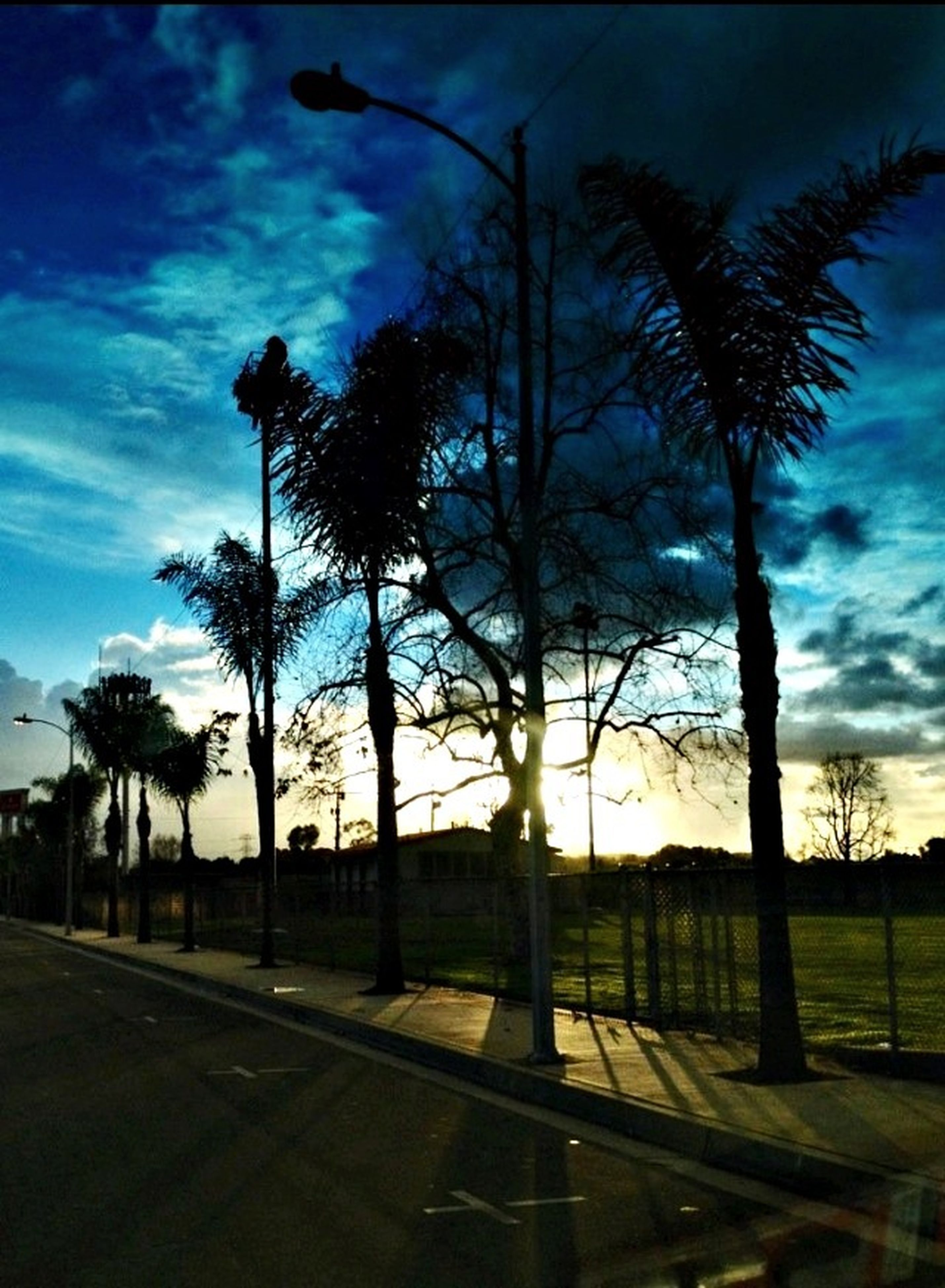 tree, sky, palm tree, silhouette, tranquility, sunset, cloud - sky, tranquil scene, tree trunk, scenics, nature, beauty in nature, growth, cloud, landscape, road, field, grass, outdoors, no people