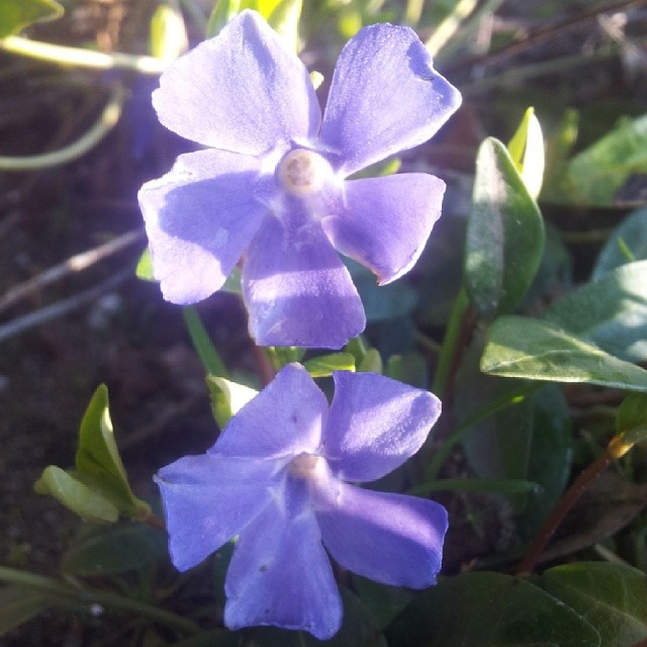 Flower Geijsteren
