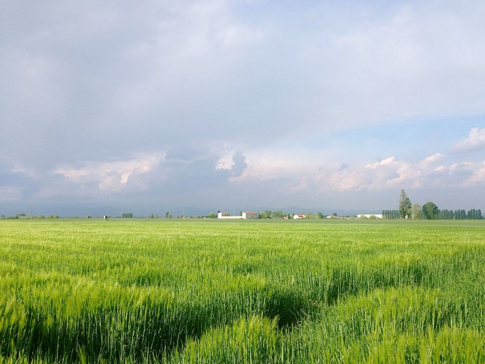 Agriculture Field Sky Green Color Growth Cloud - Sky Landscape Nature Tranquil Scene Tranquility Beauty In Nature Cereal Plant Outdoors Cielo No People Italy Springtime Breathe Weekend EyeEm Best Shots