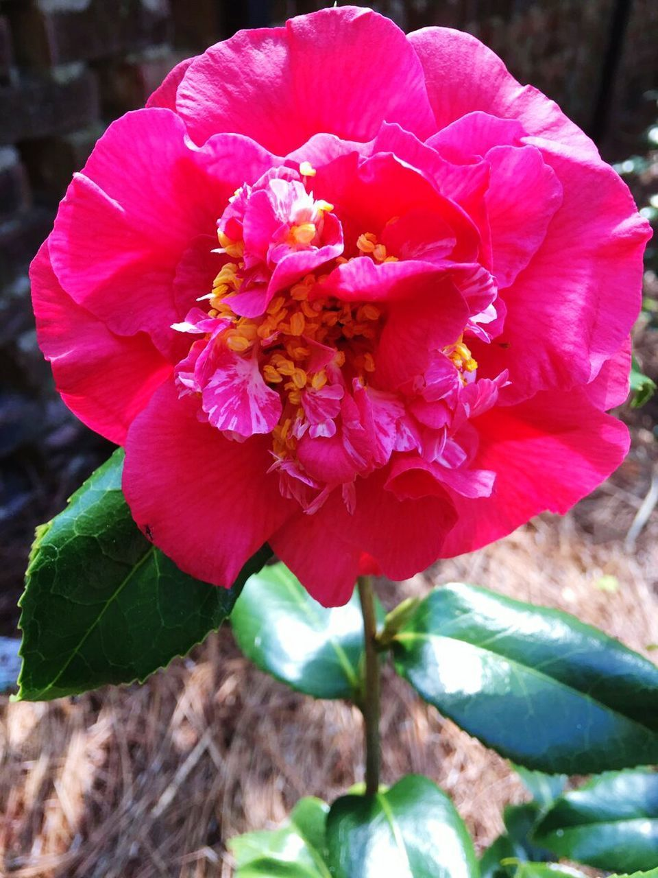 flower, petal, nature, beauty in nature, fragility, growth, flower head, plant, pink color, no people, freshness, outdoors, day, close-up, wild rose, blooming, leaf