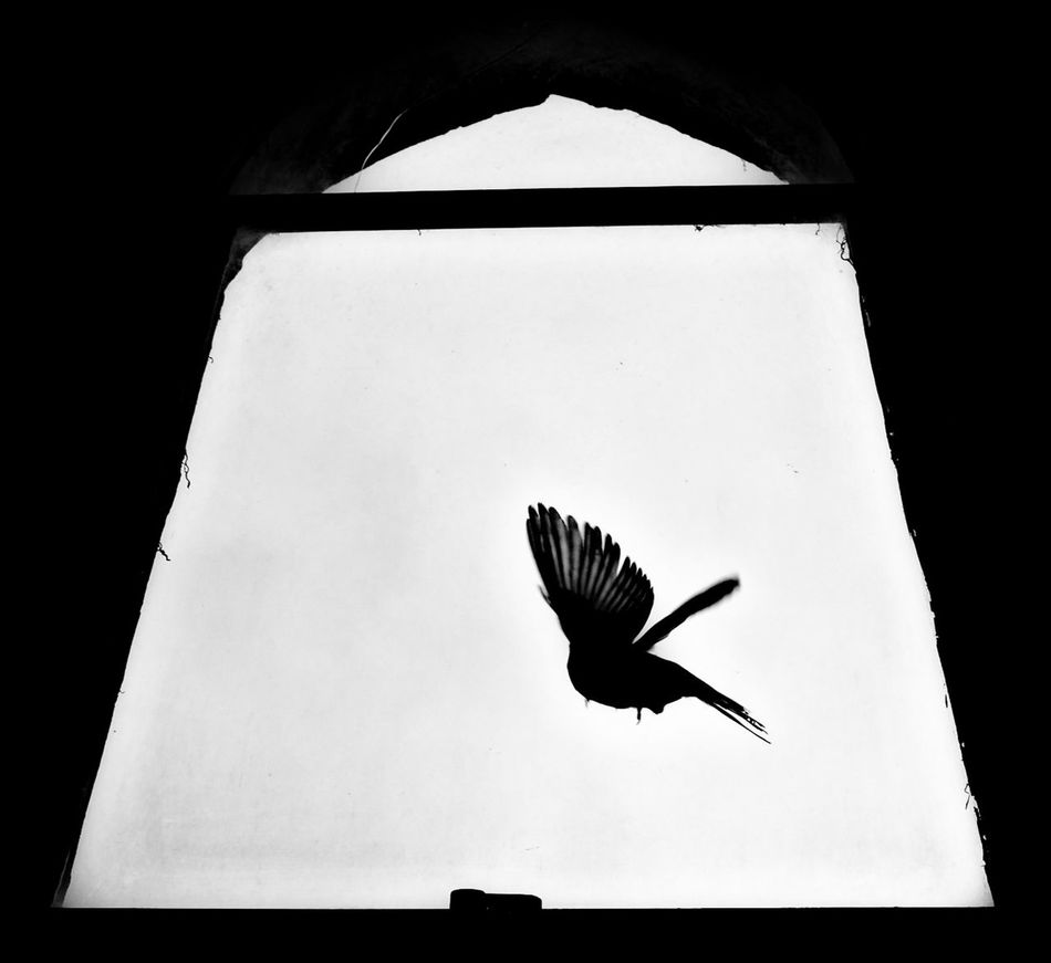 Westminster Abbey Bird Flying One Animal Animal Themes Spread Wings Silhouette Low Angle View Day No People Outdoors Sky Window High Contrast Monochrome Flying London England Westminster