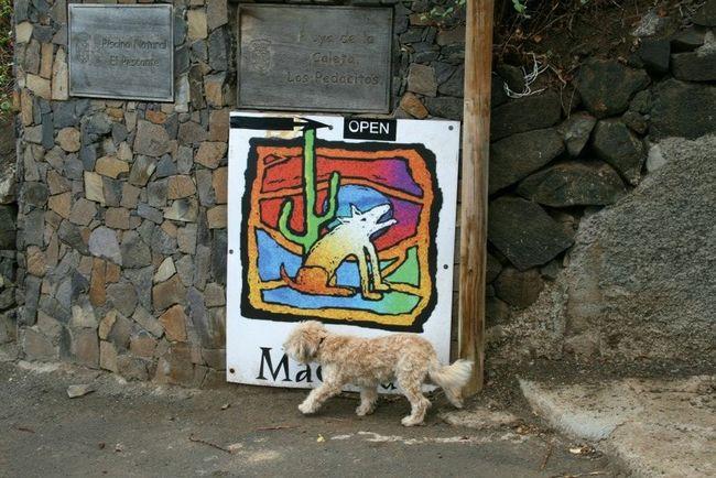 FUNNY ANIMALS Dog Adventure Enjoying Life