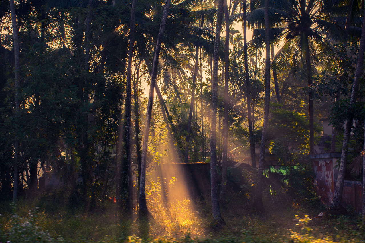 Footpath Forest Kerala Kerala India Growth Light Leak Light Through Leaves Lush Foliage Narrow Outdoors Palm Trees Park Park - Man Made Space Sun Light Through Trees Sunbeam Sunlight Sunny The Way Forward Tranquility Tree Tree Trunk Showcase: December