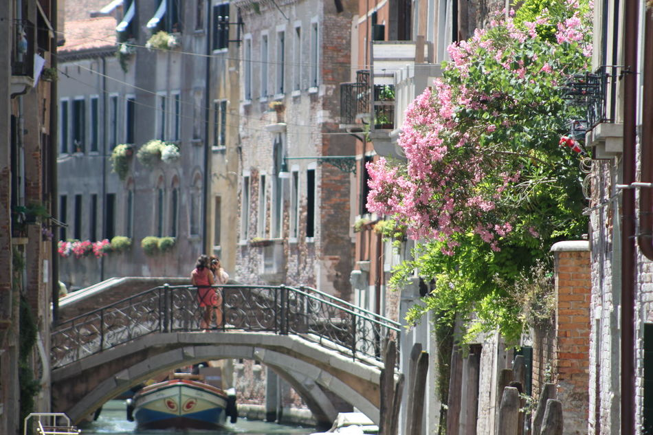 Architecture Building Building Exterior Built Structure City City Life City Street Day Growth Modern No People Outdoors Parked Residential Building Tree Venice Venice, Italy
