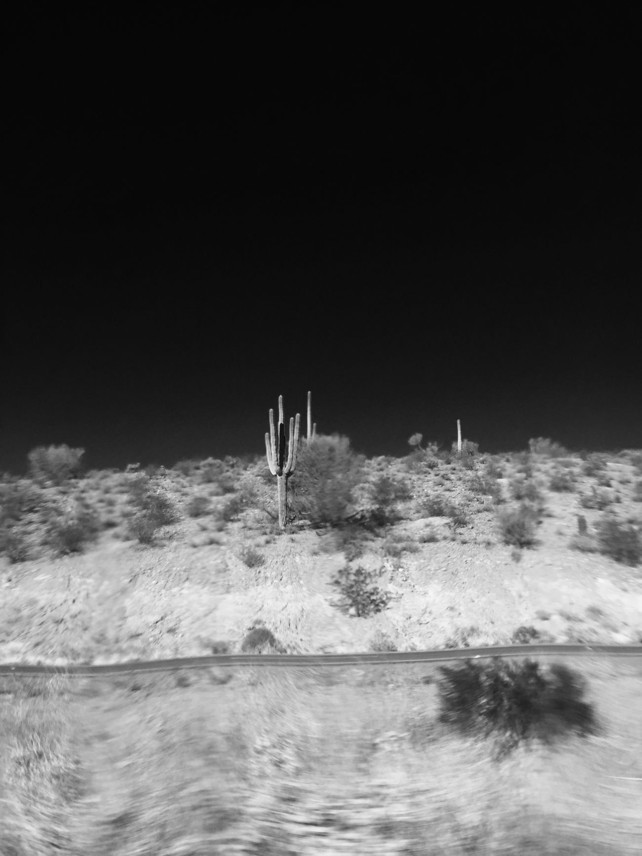 Cactus Blackandwhite Darksky Cacti Desert Tumbleweeds Movingtarget Movingpicture Contrast Blackandwhite Nature Dry Earth High Desert