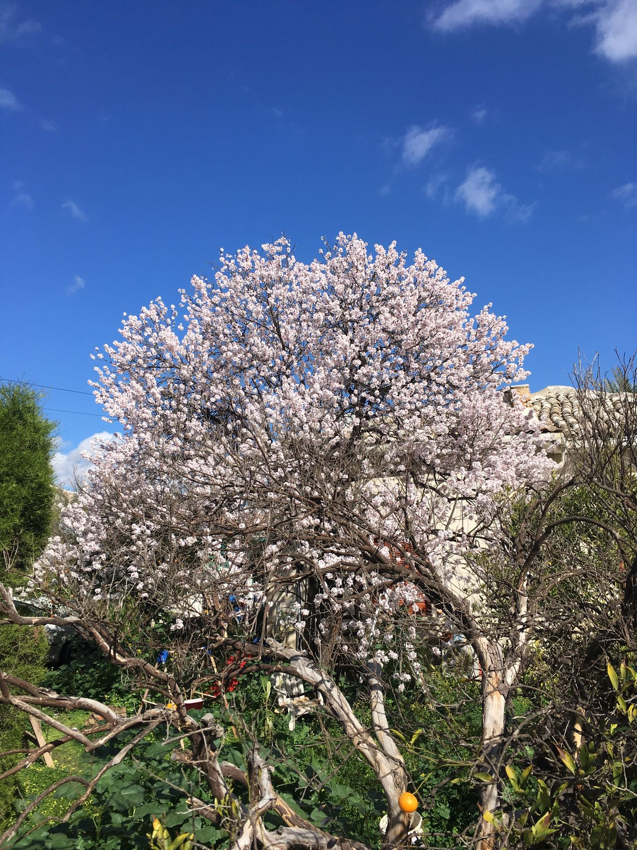 Flower Blossom Tree Nature Growth Beauty In Nature Freshness Springtime Sky Fragility No People Outdoors Day Branch