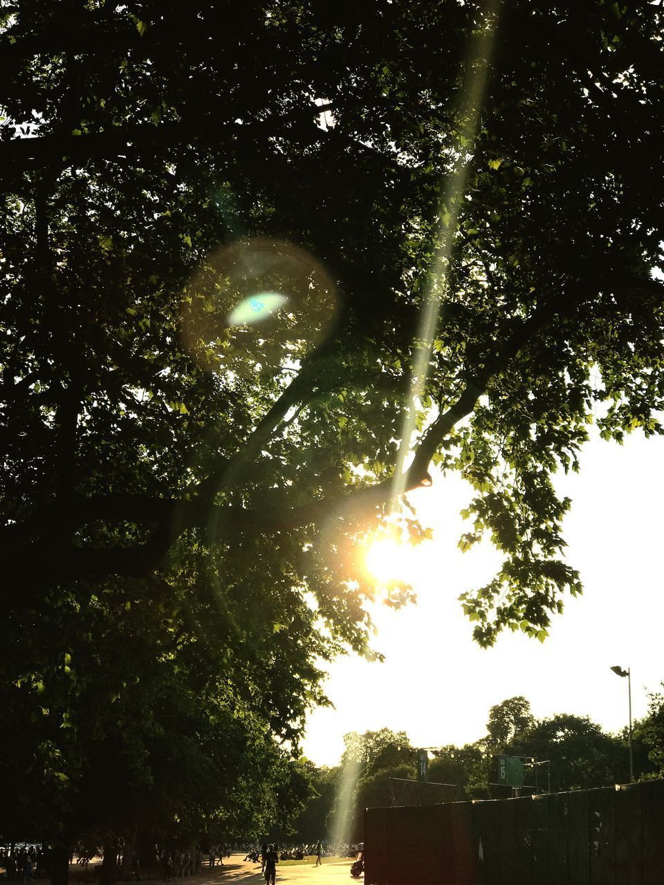 tree, sun, sunbeam, lens flare, sunlight, nature, outdoors, low angle view, no people, beauty in nature, scenics, built structure, growth, day, tranquility, building exterior, branch, architecture, sky