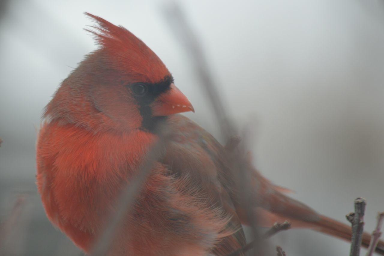 Beautiful stock photos of birds, Animal Themes, Beak, Bird, Blurred