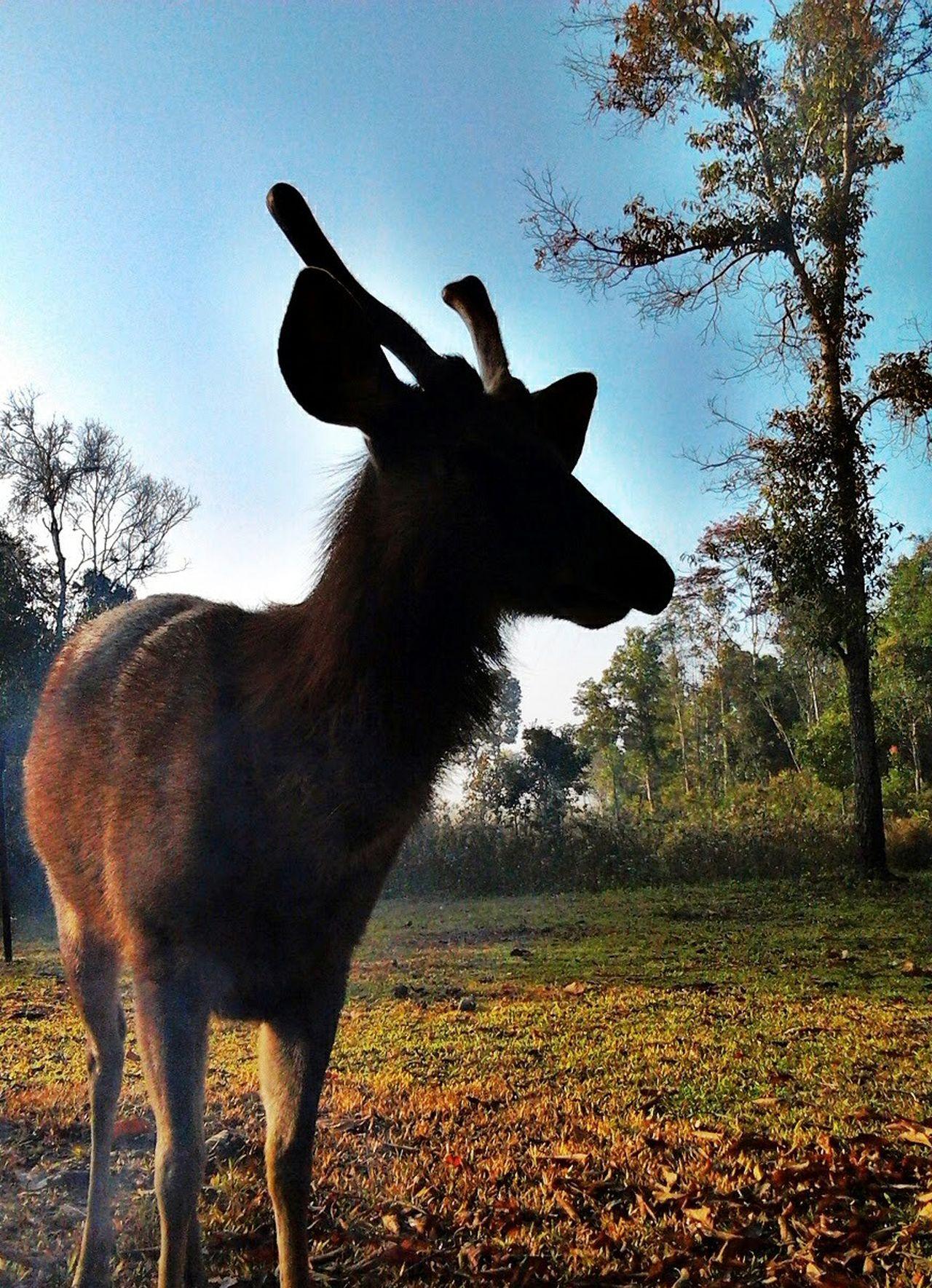Deer Moments Deer ♥♥ I Love Deer