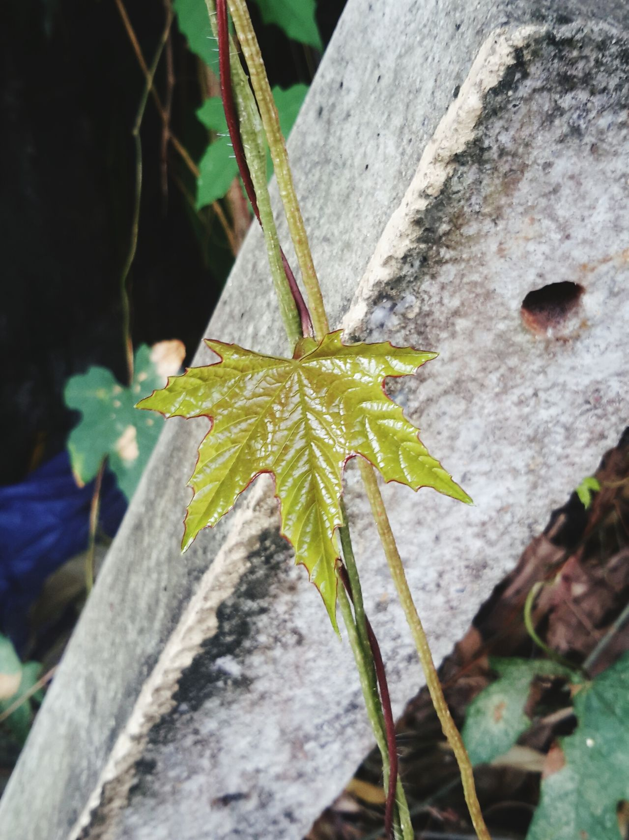 Nature No People Leaf Plant Outdoors Green Leaf Green Plant Beauty In Nature Day Green Color Growth