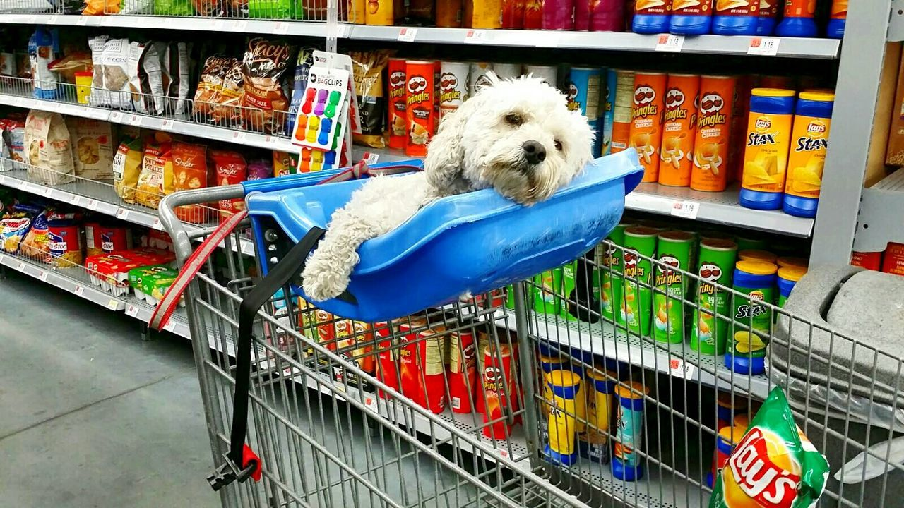 Sup Pup Walmart Chilling Pringles Chips Colours Relaxing Dogs Dogs Of EyeEm Enjoying Life Samsung Galaxy S6 Toronto Ontario Canada Canada Coast To Coast