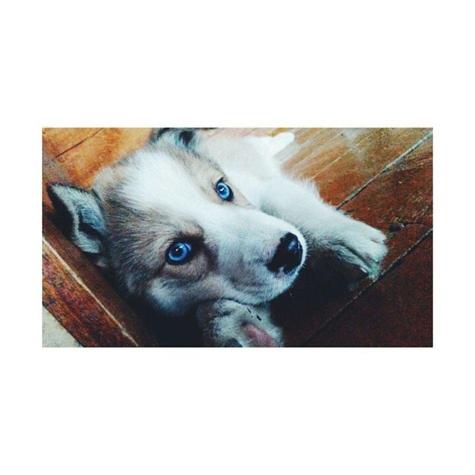 ? Dog Sweet Cute Instaykt