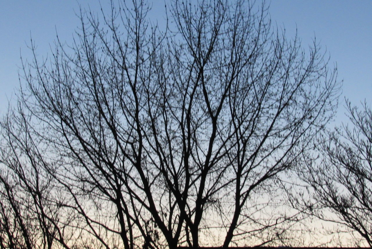 bare tree, tree, branch, low angle view, nature, sky, outdoors, day, no people, clear sky, beauty in nature, bird, animal themes