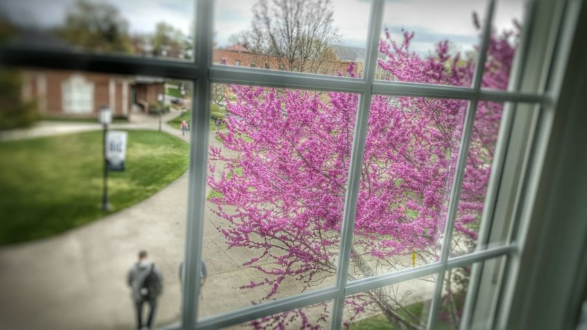 Pink Flower Spring Into Spring Flowering Tree Kentucky  School Life  Student Life Through The Window