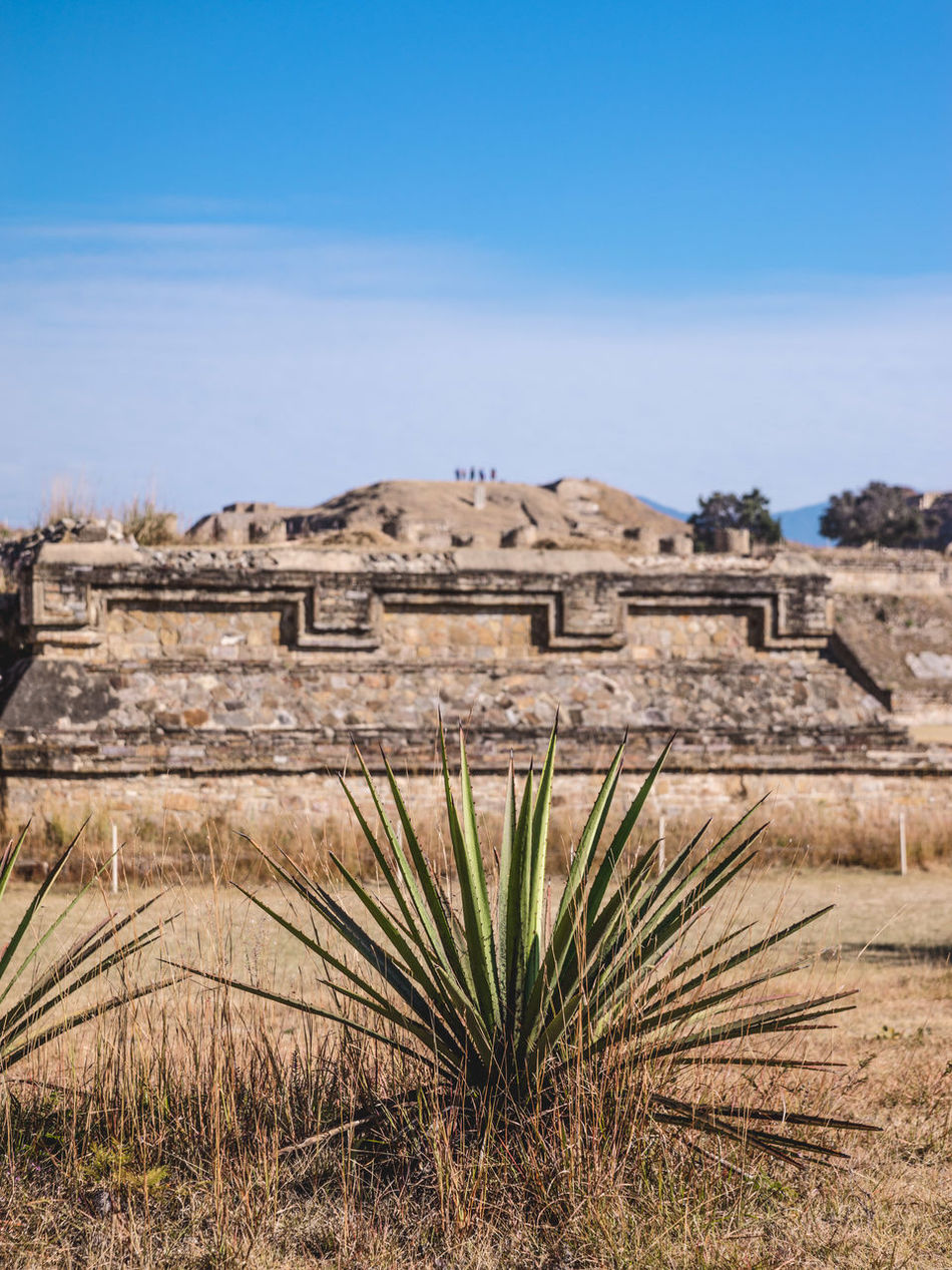 Ancient Ancient Ancient Architecture Ancient Civilization Ancient Ruins Archeology Architecture Architecture Art Building Exterior Cosmos Culture Growth History Landscape_photography Mexico Mexico_maravilloso Monte Alban Nature Nature No People Outdoors Prehispanic Pyramid Travel Destinations