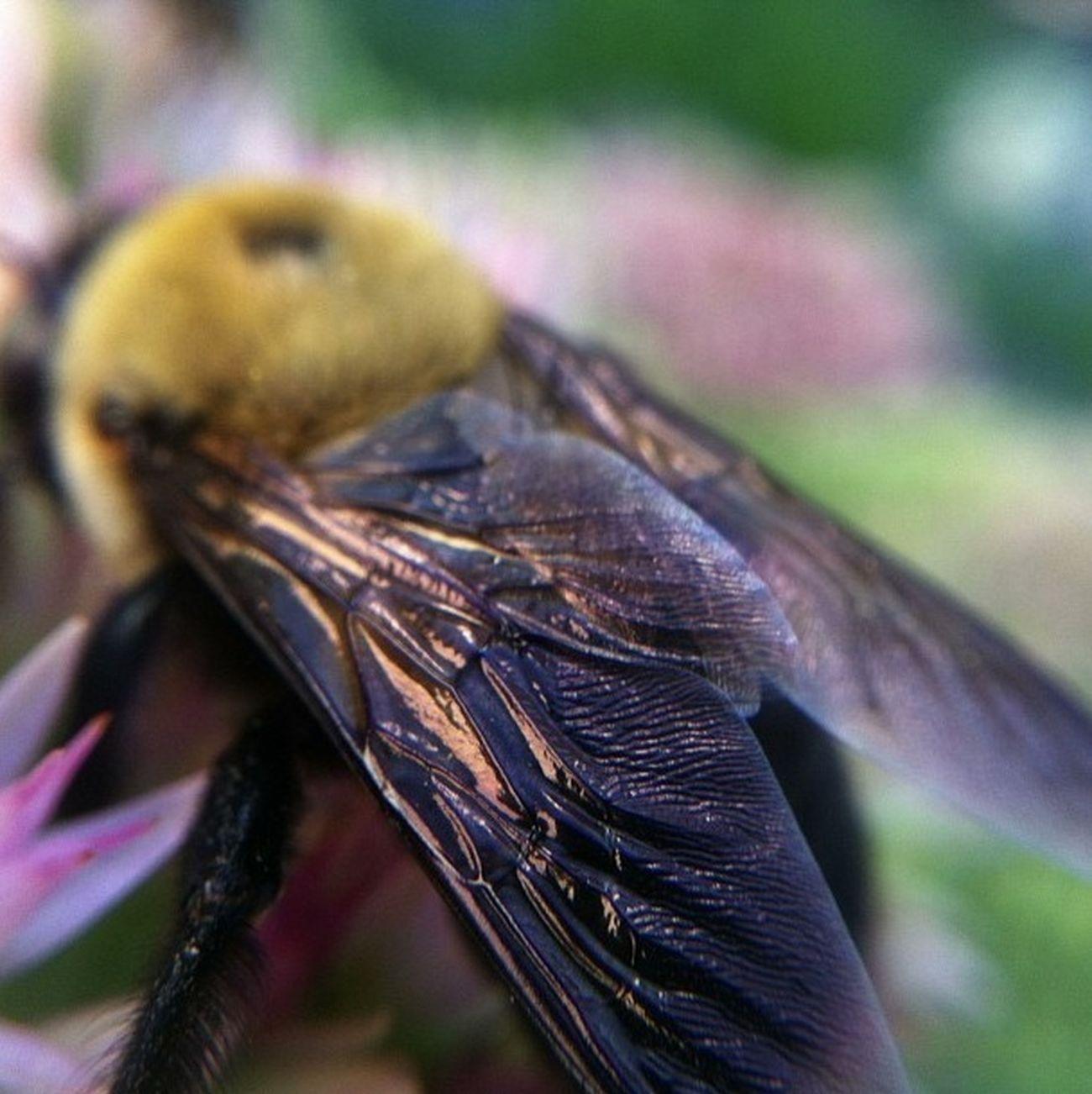 Macro Photography Bee_love Macro_bugs The Often Overlooked Beauties In Life