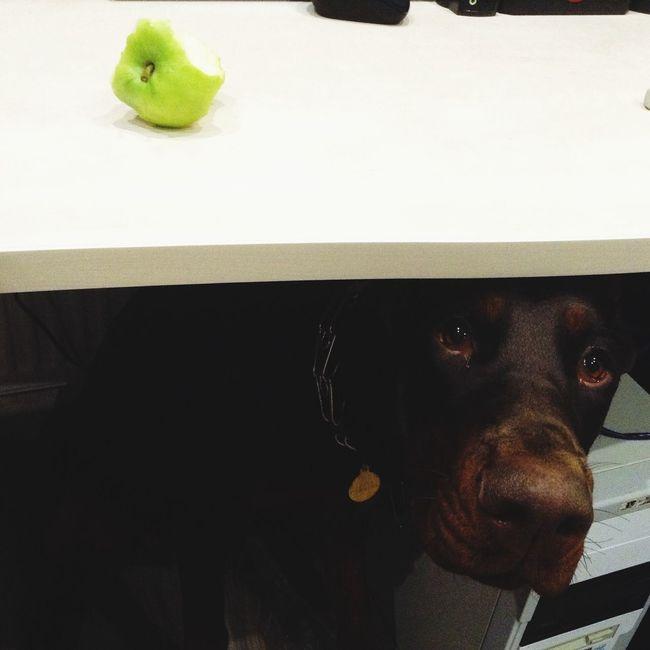 Когда не делишься с собакой яблоком)