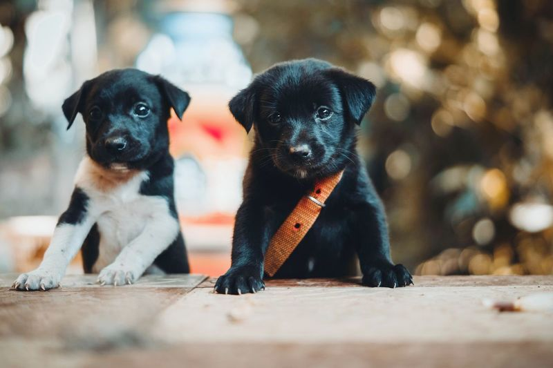 EyeEm Selects Togetherness Friendship Young Animal Domestic Animals Outdoors Puppy Pets Dog Animal Themes