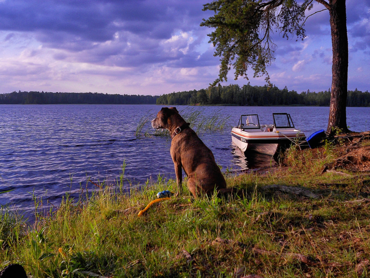 Dog Sitting By Moored Boat At Riverbank Against Cloudy Sky