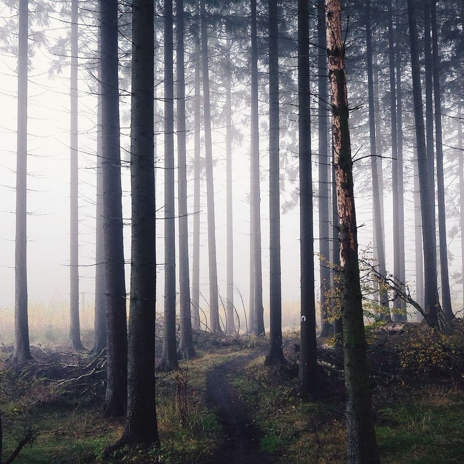 Beautiful stock photos of path, Beauty In Nature, Day, Fog, Foggy