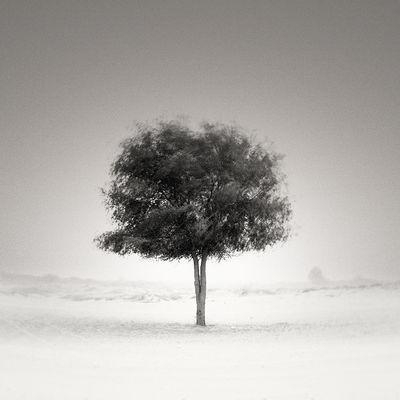 Al Ghaf Tree - symbolic of power and beauty. Fine Art Photography Fineart_photobw EyeEm Best Shots Monochrome EyeEm Best Shots - Nature Popular Photos Black And White EyeEm Blackandwhite EyeEm Nature Lover