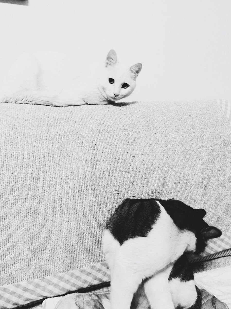 La vie est belle!🐱😸 Black And White Taking Photos Enjoying Life EyeEm IPhoneography From My Point Of View Snapshots Of Life IPhone Photography Taking Photos Animals Pets Showcase: February Eye4photography  Eye4photography  EyeEm Best Sellers Filmcamera