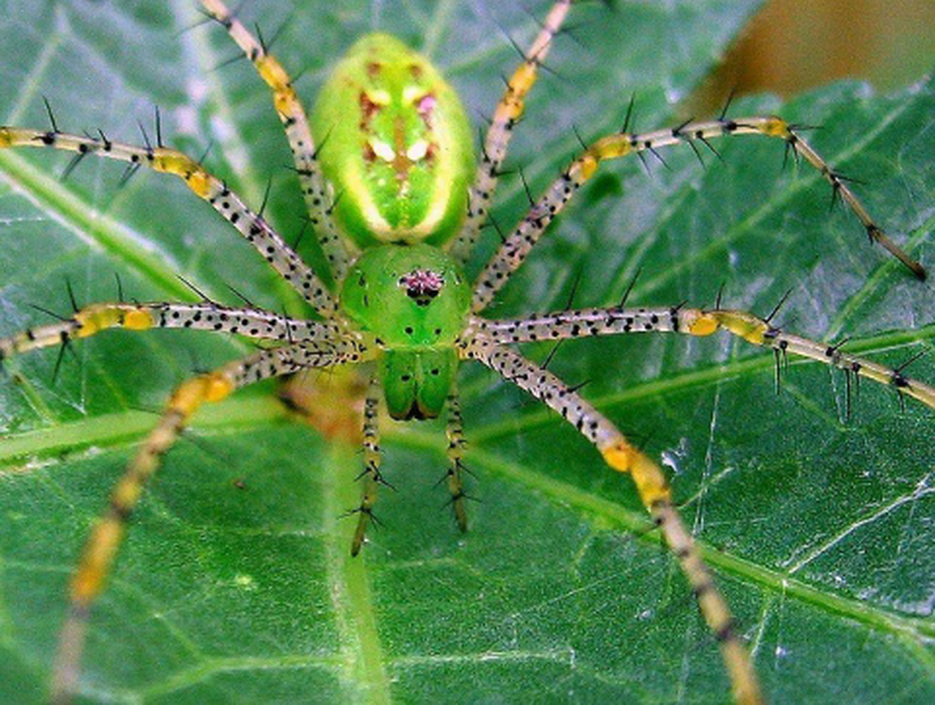 green color, close-up, growth, focus on foreground, nature, leaf, plant, beauty in nature, fragility, spider web, freshness, natural pattern, water, drop, green, wet, dew, day, spiked, outdoors