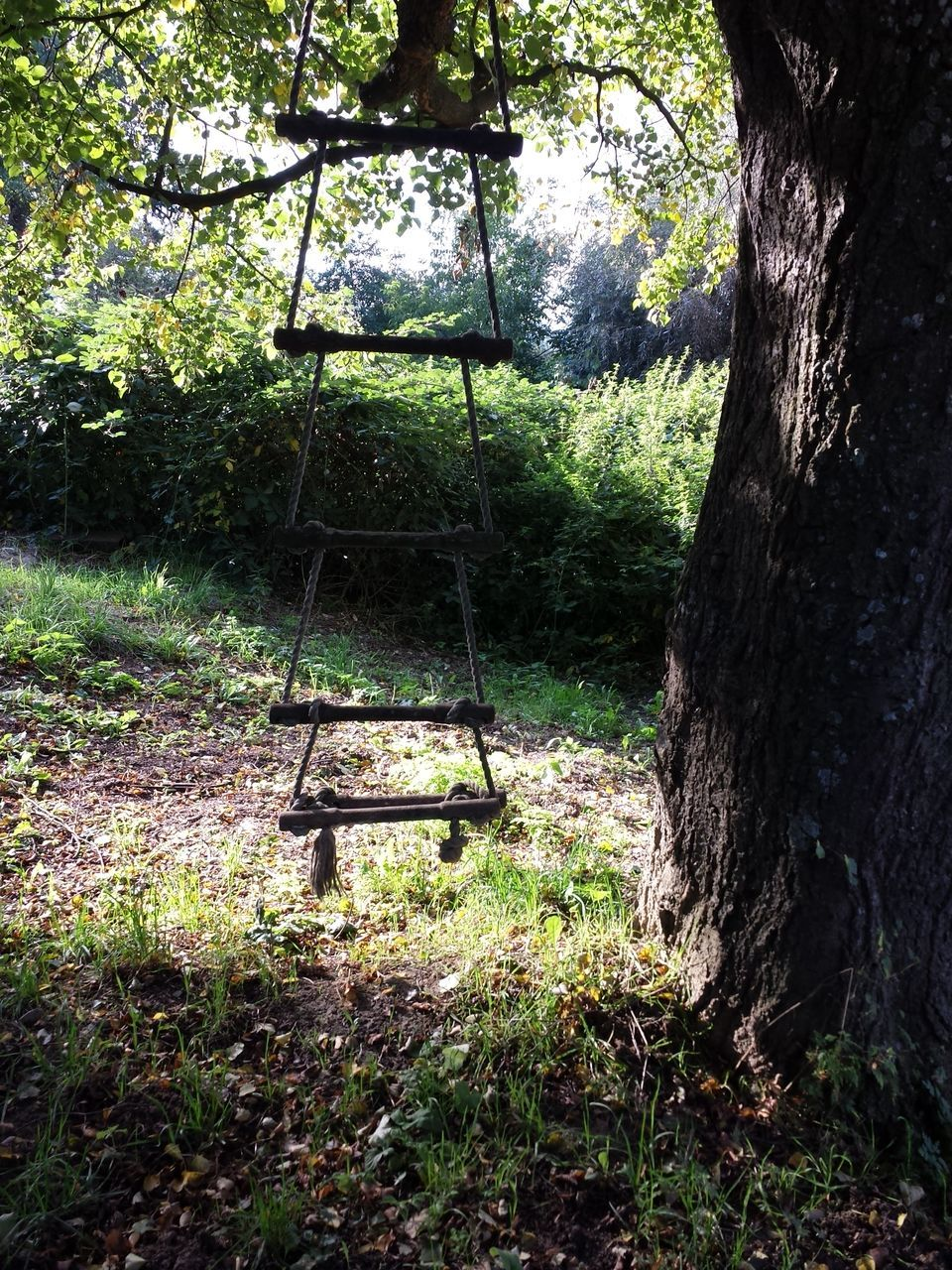 tree, swing, rope swing, tree trunk, hanging, day, no people, growth, park - man made space, outdoors, nature, grass, childhood