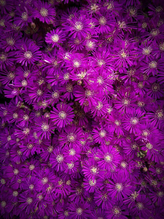 First Eyeem Photo Moda Sahili Beauty In Nature Flowers Botany Istanbul Petal