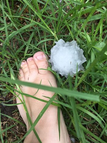 Beauty In Nature Day Foot Footwear Freshness Grass Green Color Growth Hail  Hail Stones High Angle Shots Human Body Part Large Hail Sto Nature Outdoors Spiky