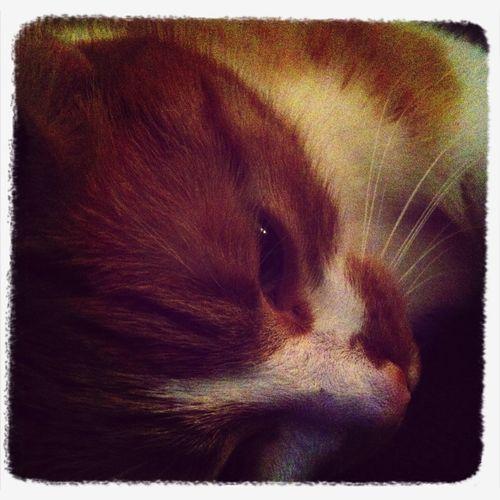 Morris is sooo cute!