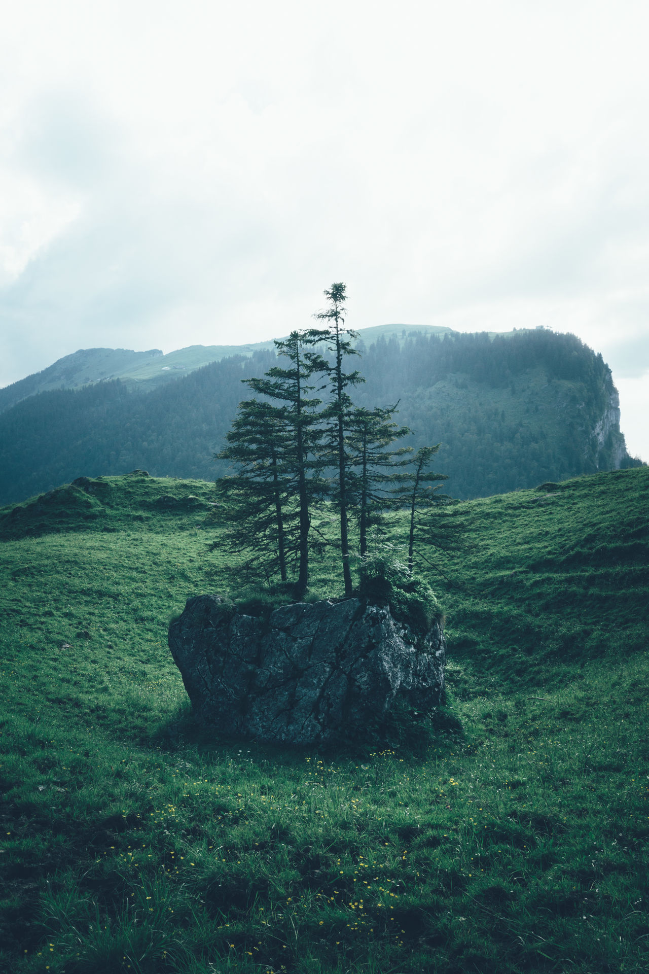 The tree of life, found in the Alpstein region in Appenzellerland, Switzerland Switzerland Swiss Swiss Alps Green Tree Magic Tree Tree Of Life Life Hipster Hipster Tree Schweiz Suisse  Green Landscape Film Photography Nature Nature Photography Plants Calm Calmness Peaceful Green Love Appenzell Alpstein Appenzellerland Natur Color Palette