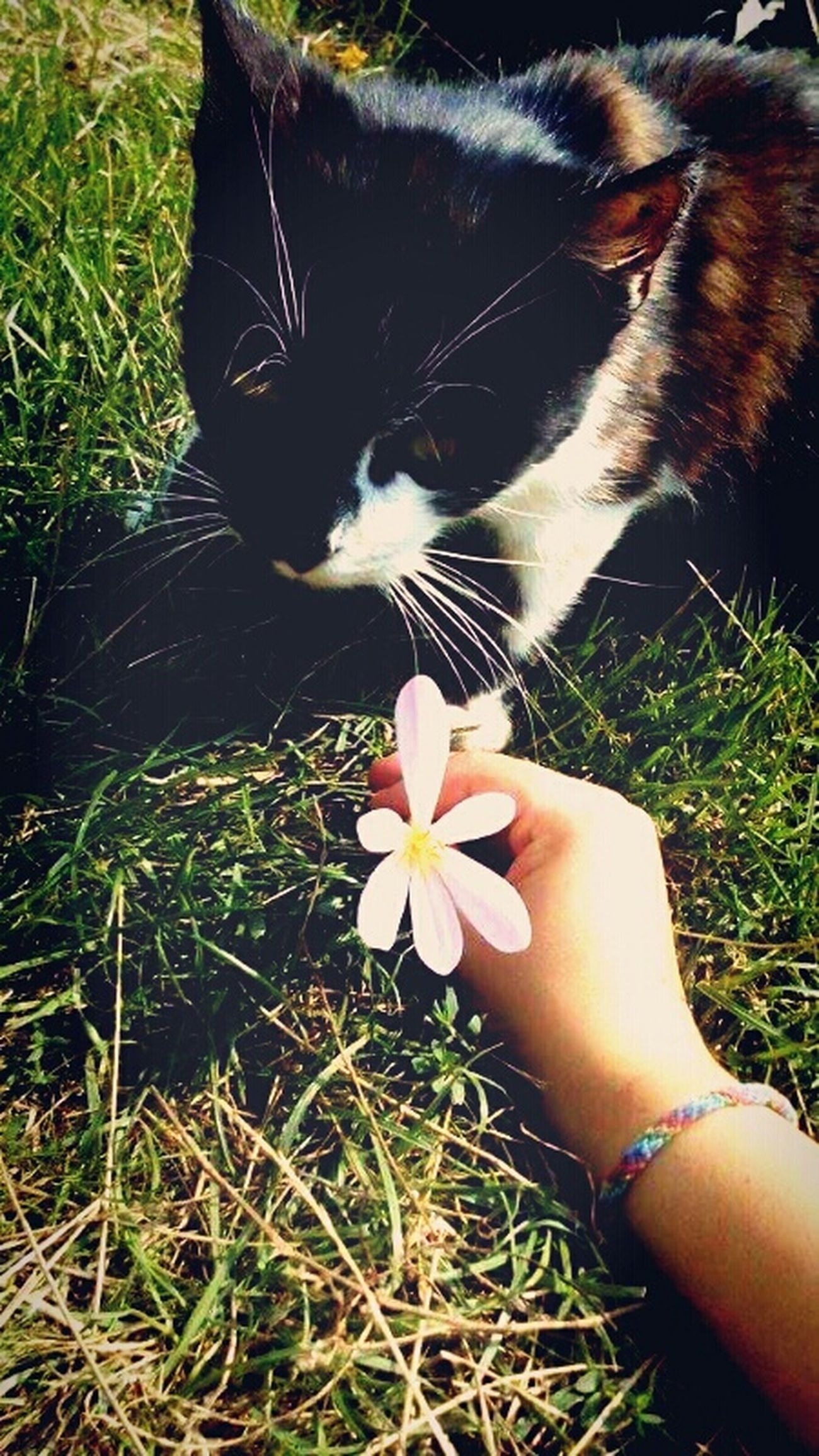 Cat♡ Cat Lovers Flowers,Plants & Garden Flowers Chilling Whit My Love <3