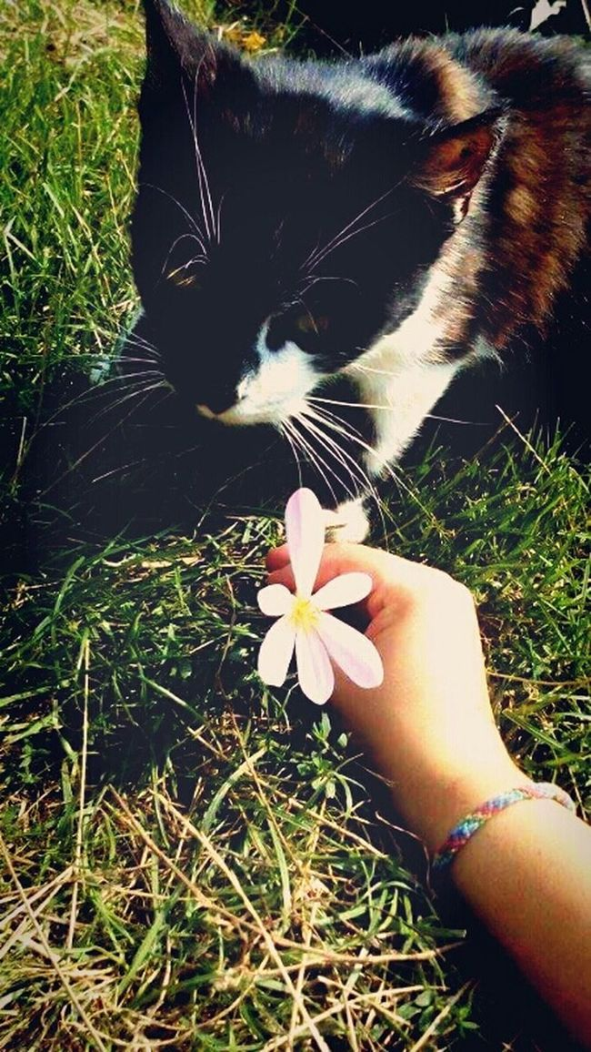 Cat♡ Cat Lovers Flowers,Plants & Garden Flowers Chilling Whit My Love <3