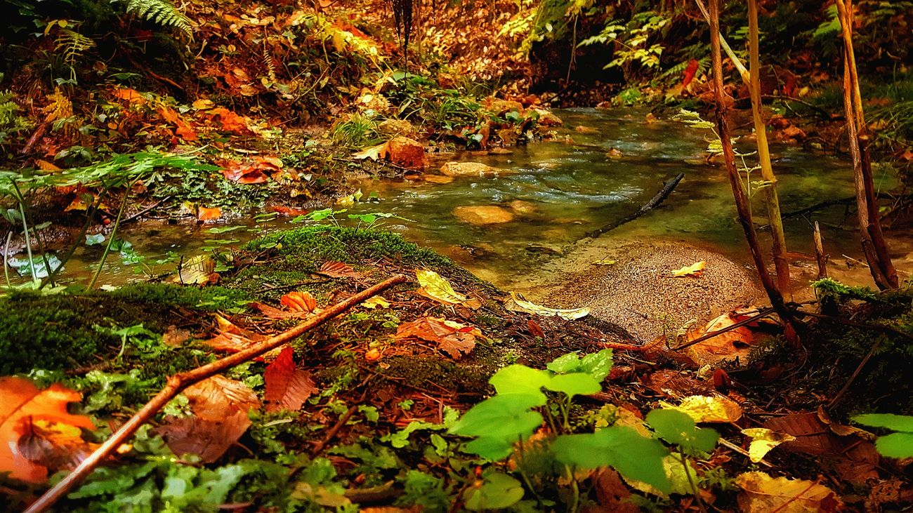 Autumn Autumn Beauty In Nature Change Day Fall Forest Leaf Leaves Nature No People Non-urban Scene Outdoors Poland Reflection Scenics Tranquility Tree Water