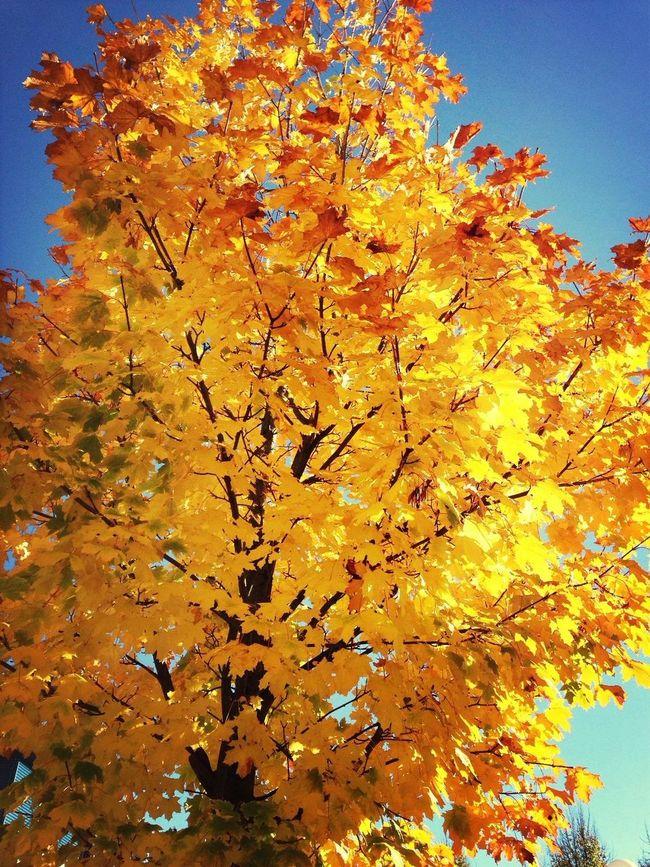 Autumn Trees Colors Of Autumn
