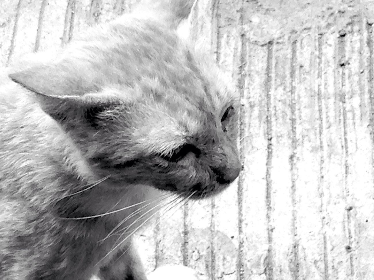 Street Cat. By Driaz. Pets By ITag Animal By ITag